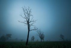 μόνο δέντρο Στοκ εικόνα με δικαίωμα ελεύθερης χρήσης