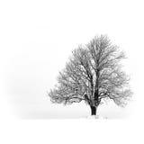 μόνο δέντρο Στοκ φωτογραφία με δικαίωμα ελεύθερης χρήσης
