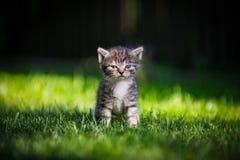 Μόνο γατάκι Στοκ Εικόνα