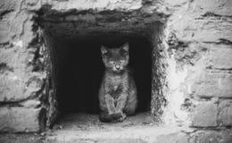 Μόνο γατάκι στοκ εικόνες