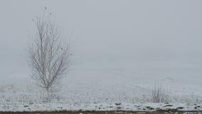 Μόνο γυμνό δέντρο στην ομίχλη το χειμώνα απόθεμα βίντεο