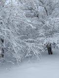 Μόνο δέντρα και χιόνι στοκ εικόνες με δικαίωμα ελεύθερης χρήσης