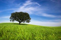μόνο δέντρο άνοιξη τοπίων Στοκ Φωτογραφία