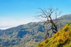 μόνο δέντρο Άποψη των βουνών στη διαδρομή Encumeada - Boca de Corrida, νησί της Μαδέρας, Πορτογαλία, Ευρώπη Στοκ φωτογραφία με δικαίωμα ελεύθερης χρήσης