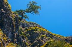 μόνο δέντρο Άποψη των βουνών στη διαδρομή Encumeada - Boca de Corrida, νησί της Μαδέρας, Πορτογαλία, Ευρώπη Στοκ Φωτογραφία