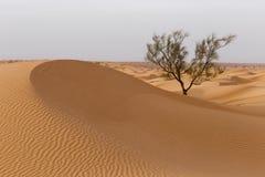 μόνο δέντρο ερήμων Στοκ εικόνες με δικαίωμα ελεύθερης χρήσης