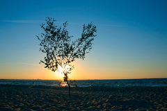 μόνο δέντρο ηλιοβασιλέματ στοκ φωτογραφίες