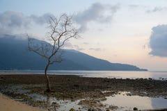 Μόνο δέντρο, νησί Tioman, Μαλαισία στοκ φωτογραφία με δικαίωμα ελεύθερης χρήσης