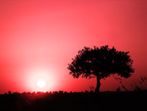 μόνο δέντρο πεδίων Στοκ φωτογραφίες με δικαίωμα ελεύθερης χρήσης