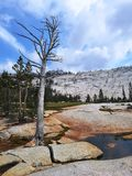 Μόνο δέντρο που στέκεται μόνο στο ραγισμένο βράχο Στοκ εικόνες με δικαίωμα ελεύθερης χρήσης