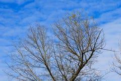 Μόνο δέντρο πτώσης ενάντια στο μπλε ουρανό Στοκ εικόνες με δικαίωμα ελεύθερης χρήσης