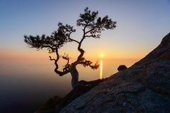 Μόνο δέντρο στην άκρη του απότομου βράχου στοκ εικόνες