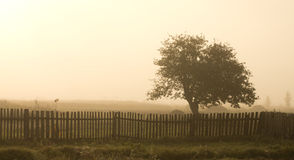 Μόνο δέντρο στην ομίχλη Στοκ Φωτογραφίες