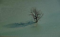 Μόνο δέντρο στη μέση του πλημμυρισμένου εδάφους Στοκ φωτογραφίες με δικαίωμα ελεύθερης χρήσης