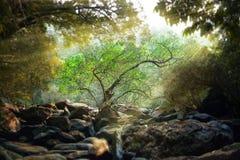 Μόνο δέντρο στις ακτίνες της ανάπτυξης ήλιων στο δάσος στους βράχους Στοκ εικόνα με δικαίωμα ελεύθερης χρήσης