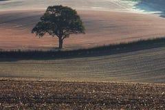 Μόνο δέντρο στους κυλώντας τομείς της βρετανικής επαρχίας στοκ φωτογραφίες