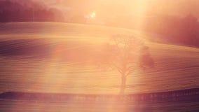 Μόνο δέντρο στους τομείς καλλιέργειας ανοίξεων στο φως ανατολής απόθεμα βίντεο