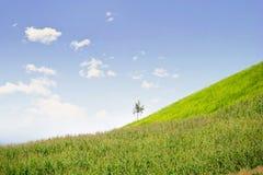 Μόνο δέντρο στο βουνό, σύνθεση της φύσης Στοκ Εικόνες