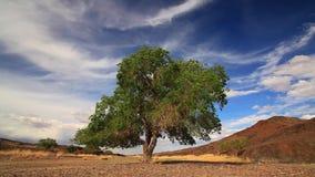 Μόνο δέντρο στο θερινό τομέα ενάντια σε έναν όμορφο ουρανό απόθεμα βίντεο