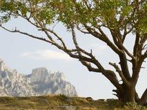 μόνο δέντρο φυστικιών Στοκ φωτογραφία με δικαίωμα ελεύθερης χρήσης