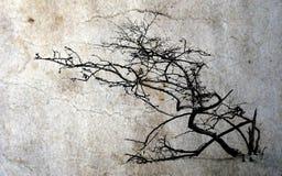 μόνο δέντρο Στοκ Φωτογραφία
