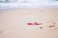 Μόνο εγκαταλειμμένο κόκκινο φύλλο που οδηγείται μια ακτή ως εννοιολογικό backgr Στοκ εικόνα με δικαίωμα ελεύθερης χρήσης
