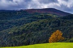 Μόνο κίτρινο δέντρο σε ένα λιβάδι βουνών στο πόδι του Hymba Στοκ φωτογραφία με δικαίωμα ελεύθερης χρήσης