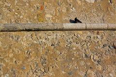 Μόνο μαύρο περιστέρι στο γείσο ενός τοίχου πετρών Στοκ Εικόνες