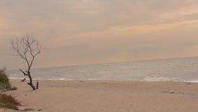 Μόνο νεκρό δέντρο χωρίς φύλλα ενάντια στη θάλασσα, ξηρό δέντρο θαλασσίως απόθεμα βίντεο