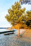 Μόνο παλαιό πεύκο κοντά σε έναν ποταμό στην ανατολή Στοκ Φωτογραφία