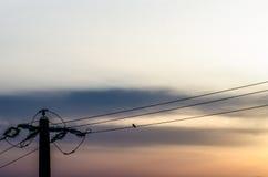 Μόνο περιστέρι στο καλώδιο ηλεκτρικής ενέργειας Στοκ φωτογραφία με δικαίωμα ελεύθερης χρήσης