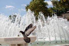 Μόνο πουλί μέχρι τις ζωές πηγών στο αστικό περιβάλλον Στοκ Εικόνες