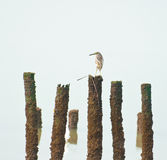 Μόνο πουλί Στοκ Φωτογραφίες