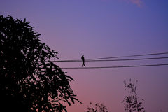 Μόνο πουλί Στοκ εικόνες με δικαίωμα ελεύθερης χρήσης