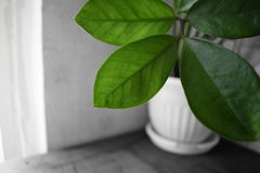 Μόνο πράσινος Στοκ Φωτογραφίες