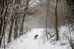 Μόνο σκυλί στο τοπίο χειμερινού δασικό χειμώνα που αγνοεί το θόριο στοκ εικόνα