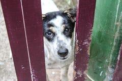 Μόνο σκυλί Στοκ φωτογραφία με δικαίωμα ελεύθερης χρήσης