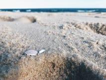 Μόνο σπασμένο θαλασσινό κοχύλι στην παραλία στοκ εικόνα με δικαίωμα ελεύθερης χρήσης