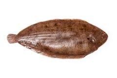 Μόνο σύνολο ψαριών του Ντόβερ Στοκ εικόνα με δικαίωμα ελεύθερης χρήσης