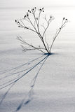 Μόνο φυτό στο χιόνι στοκ εικόνες