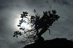 Μόνο φυτό Στοκ Φωτογραφία
