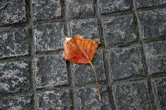 Μόνο φύλλο φθινοπώρου στο πεζοδρόμιο Η έννοια του φθινοπώρου, λ Στοκ εικόνες με δικαίωμα ελεύθερης χρήσης