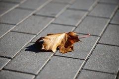 Μόνο φύλλο σφενδάμου στο πεζοδρόμιο Στοκ Φωτογραφία