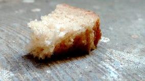 Μόνο ψωμί Στοκ εικόνες με δικαίωμα ελεύθερης χρήσης