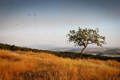 μόνο όμορφο δέντρο θερινού ηλιοβασιλέματος τοπίων πεδίων πράσινο Στοκ εικόνα με δικαίωμα ελεύθερης χρήσης