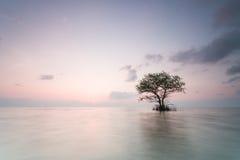 μόνο όμορφο δέντρο θερινού ηλιοβασιλέματος τοπίων πεδίων πράσινο Στοκ Φωτογραφίες