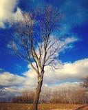 μόνο όμορφο δέντρο θερινού ηλιοβασιλέματος τοπίων πεδίων πράσινο στοκ φωτογραφία με δικαίωμα ελεύθερης χρήσης