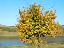 Μόνο όμορφο δέντρο φθινοπώρου Τοπίο φθινοπώρου Στοκ Εικόνα