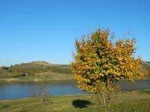 Μόνο όμορφο δέντρο φθινοπώρου Τοπίο φθινοπώρου Στοκ εικόνα με δικαίωμα ελεύθερης χρήσης