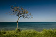 μόνο δέντρο πεύκων Στοκ εικόνα με δικαίωμα ελεύθερης χρήσης